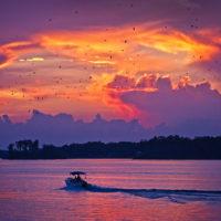 Lake Murray Purple Martin Sunset